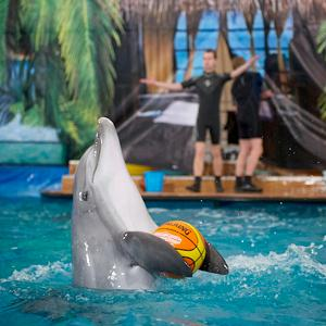 Дельфинарии, океанариумы Варегово