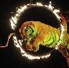 Цирки в Варегово