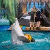 Дельфинарии, океанариумы в Варегово